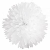 pompon blanco
